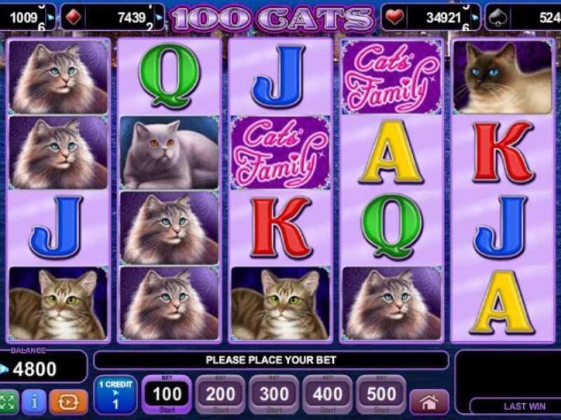 Katzen Spiele Kostenlos Ohne Anmeldung